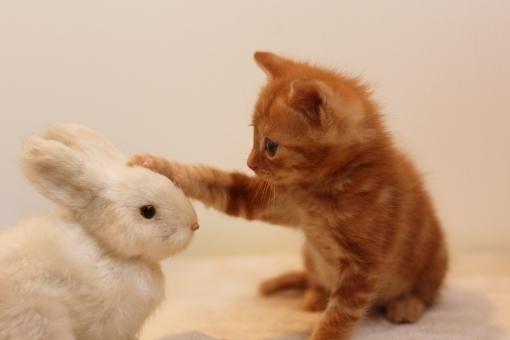 猫がうさぎを褒めてる画像.jpeg